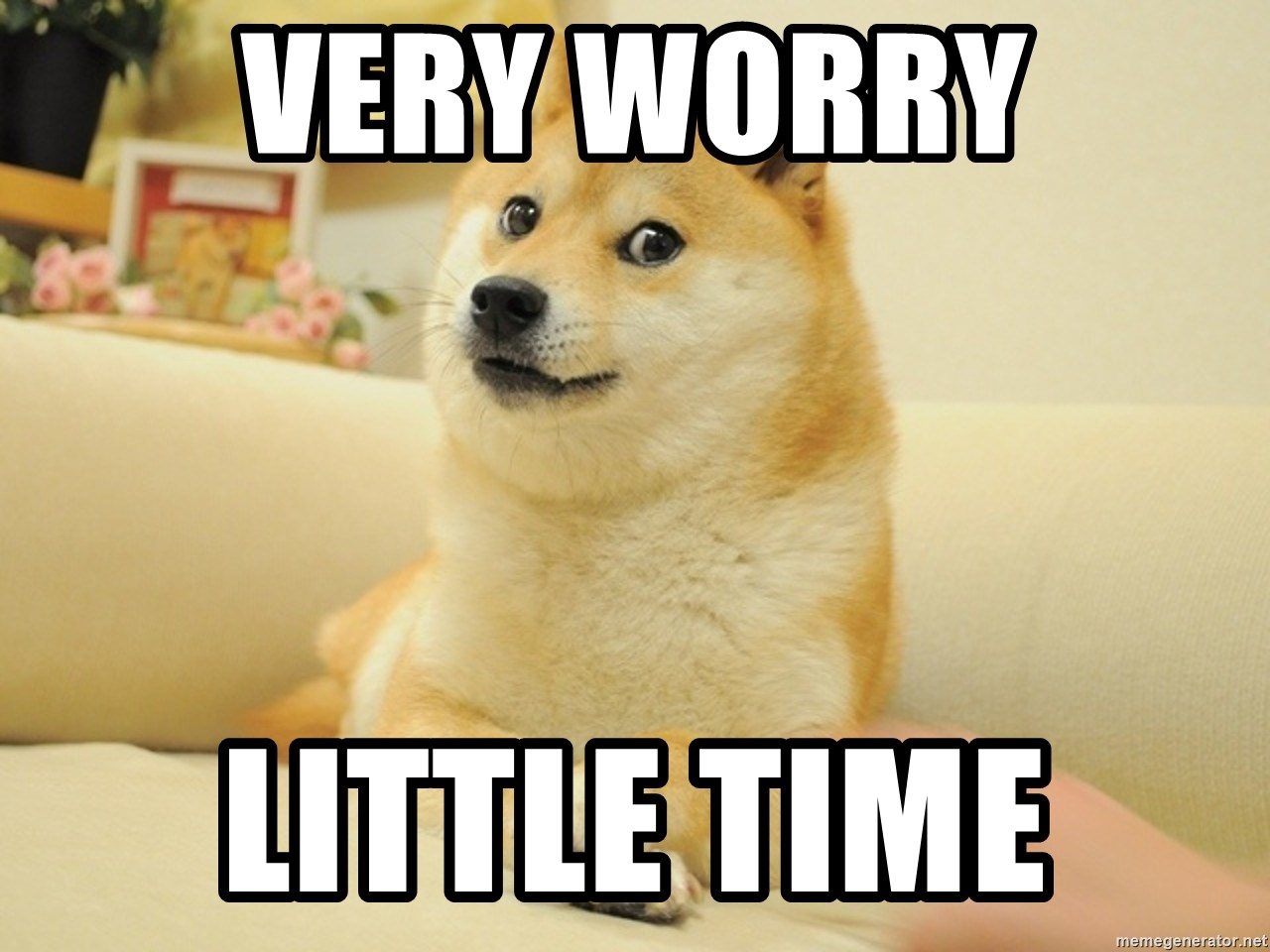 so doge - very worry little time