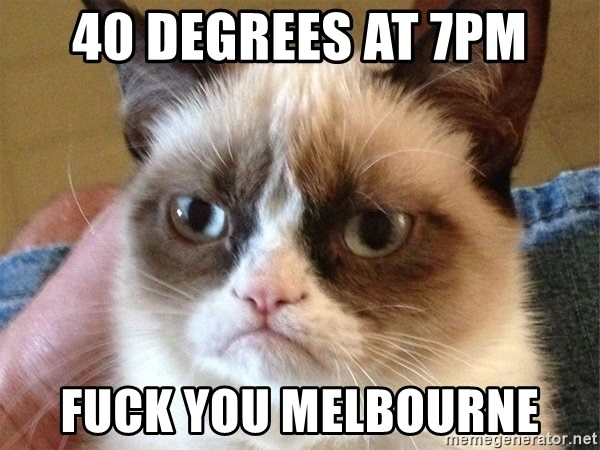 Angry Cat Meme - 40 degrees at 7pm fuck you melbourne