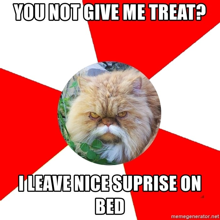 Diabetic Cat - YOU NOT GIVE ME TREAT? I leave NIce suprise on bed