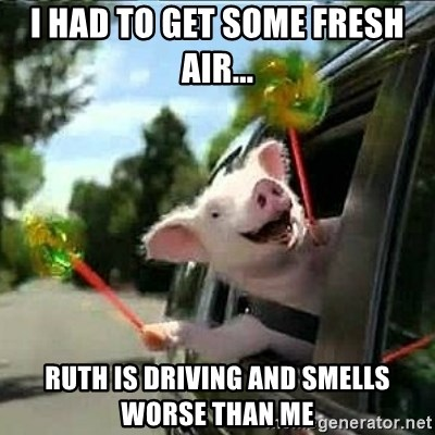 geico pig - I Had to get some fresh air... ruth is driving and smells worse than me