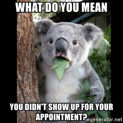 Koala can't believe it - WHAT DO YOU MEAN YOU DIDN'T SHOW UP FOR YOUR APPOINTMENT?