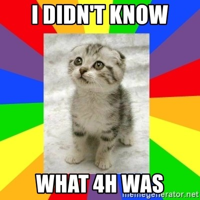 Cute Kitten - I didn't know What 4h Was