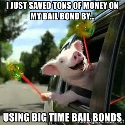 geico pig - I just saved tons of money on my bail bond by... using Big Time Bail Bonds