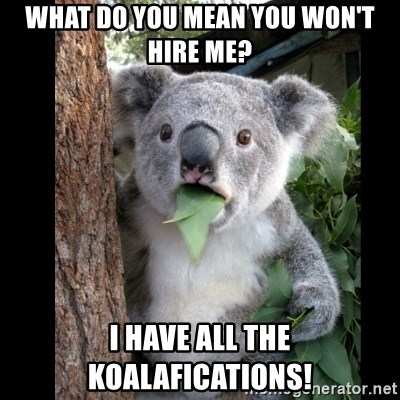 Koala can't believe it - What do you mean you won't hire me? I have all the koalafications!