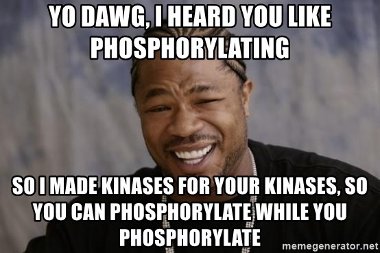xzibit-yo-dawg - yo dawg, i heard you like phosphorylating so i made kinases for your kinases, so you can phosphorylate while you  phosphorylate