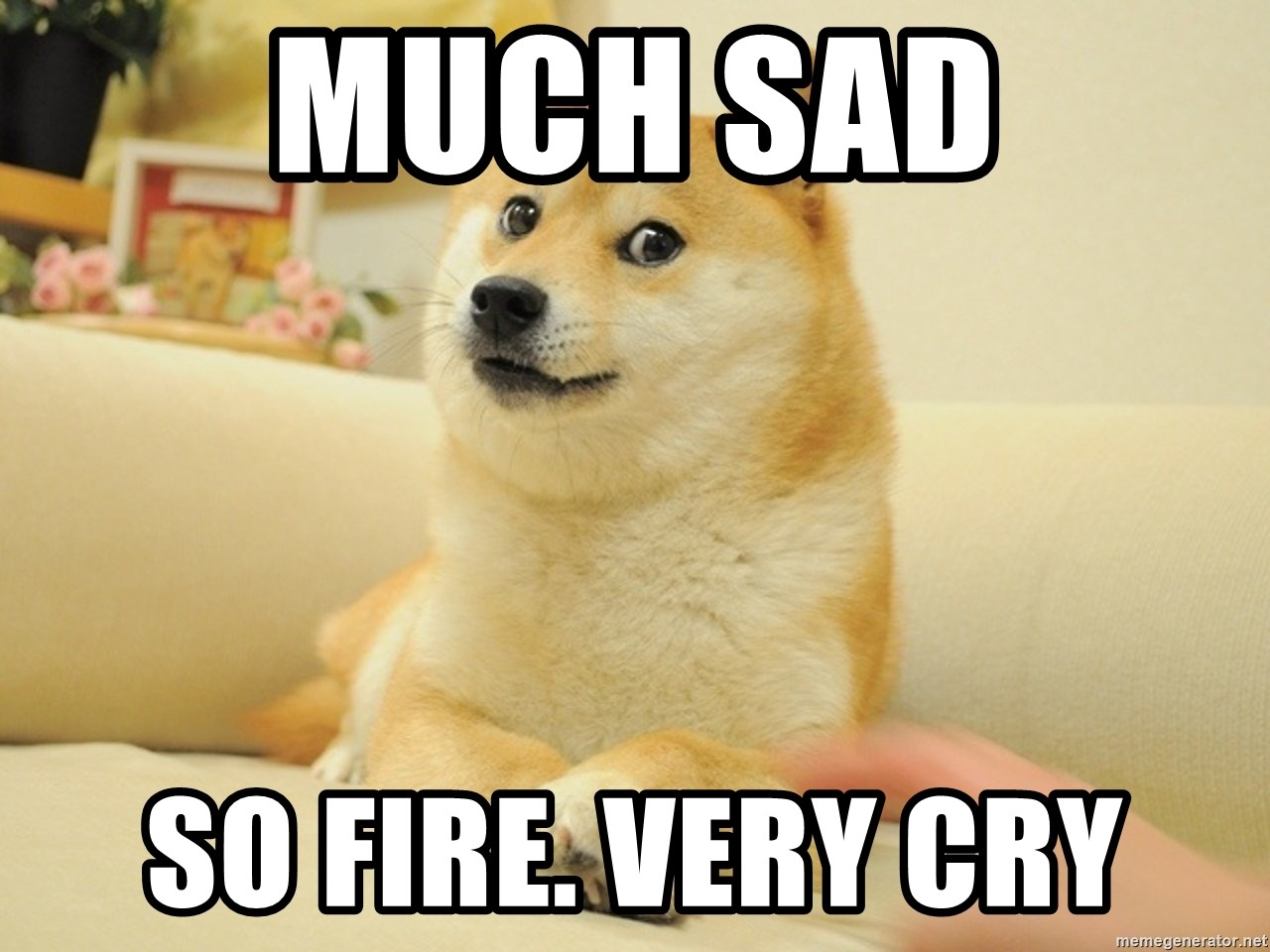 so doge - much sad so fire. very cry