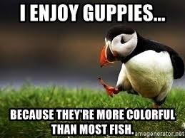 Unpopular Opinion - I enjoy guppies... because they're more colorful than most fish.