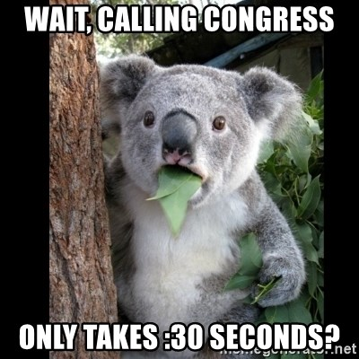 Koala can't believe it - Wait, Calling congress only takes :30 seconds?
