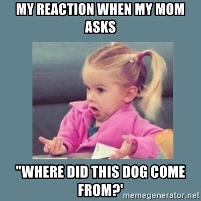 "Baby Good Luck Charlie - My reaction when my mom asks ""where did this dog come from?'"