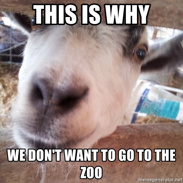Animals with song quotes - this is why we don't want to go to the zoo