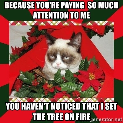 GRUMPY CAT ON CHRISTMAS - because you're paying  so much attention to me you haven't noticed that I set the tree on fire