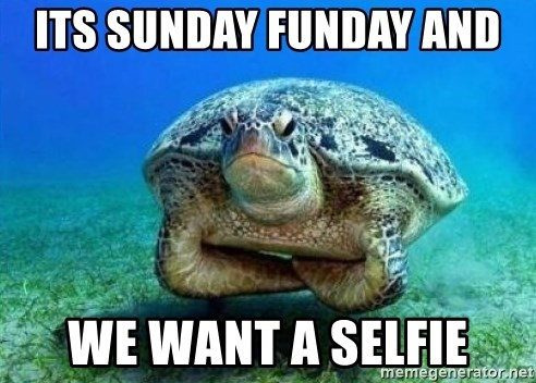 disappointed turtle - its sunday funday and  we want a selfie