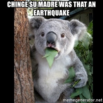 Koala can't believe it - chinge su madre was that an earthquake