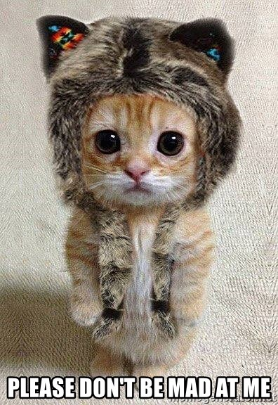 cute catty - Please don't be mad at me
