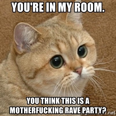 motherfucking game cat - you're in my room. you think this is a motherfucking rave party?