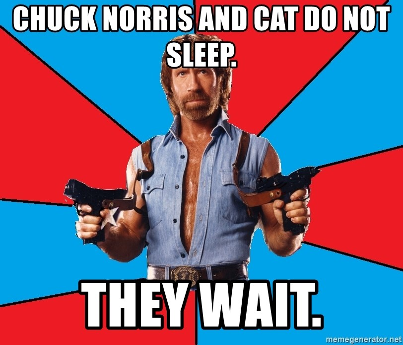Chuck Norris  - CHUCK NORRIS AND CAT DO NOT SLEEP. THEY WAIT.
