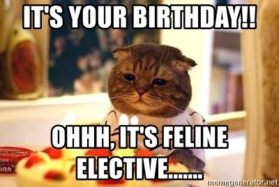 Birthday Cat - it's your BIRTHDAY!! ohhh, it's Feline elective.......