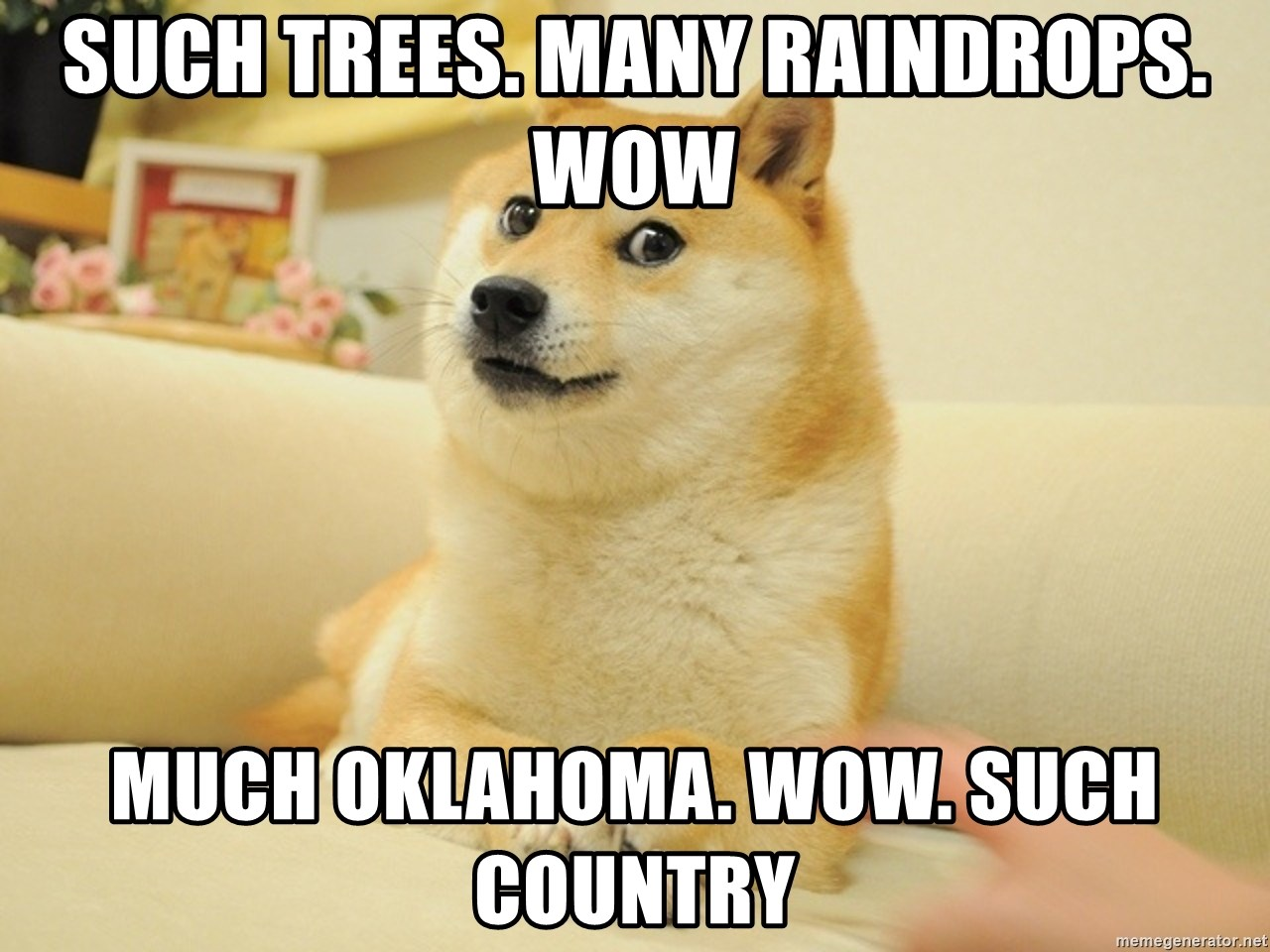so doge - such trees. many raindrops. wow much oklahoma. wow. such country