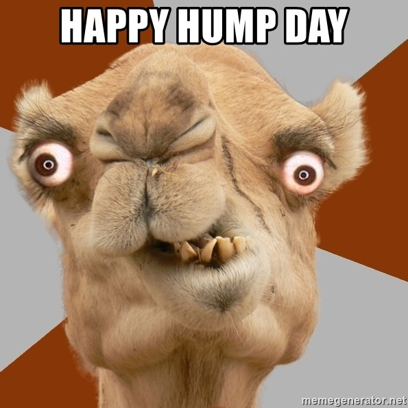Crazy Camel lol - Happy Hump Day