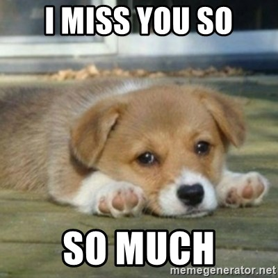 I Miss You So So Much Sad Puppy Face Meme Generator