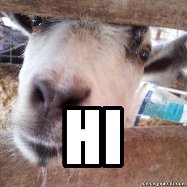Animals with song quotes - Hi