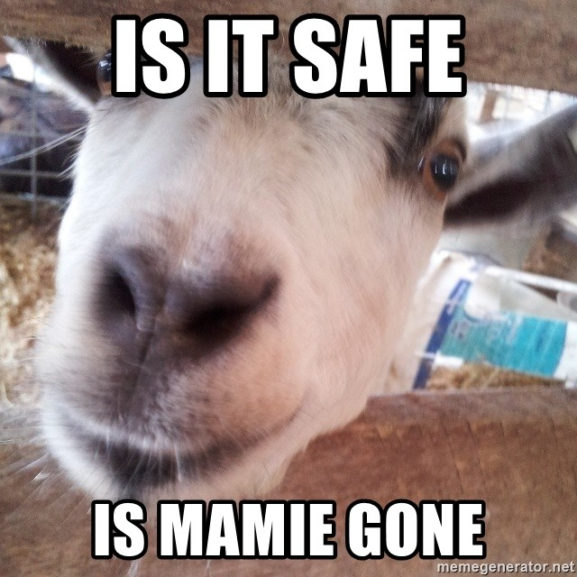 Animals with song quotes - IS IT SAFE IS MAMIE GONE