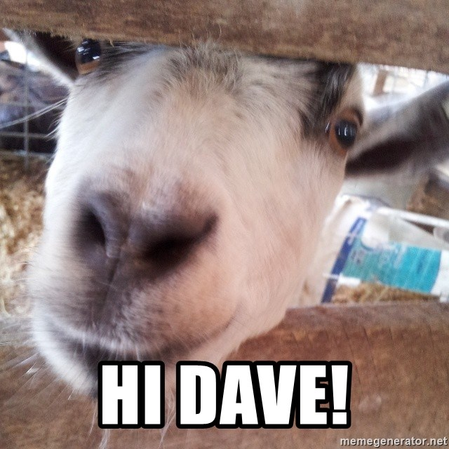 Animals with song quotes - Hi Dave!
