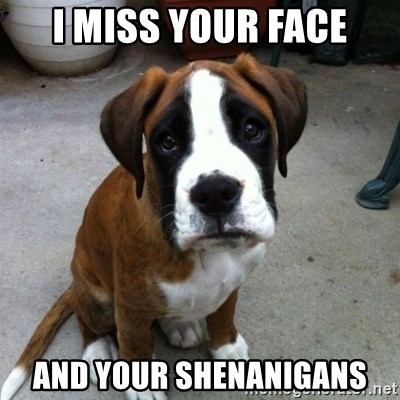 Sad puppy eyes - I MISS YOUR FACE and YOUR SHENANIGANS