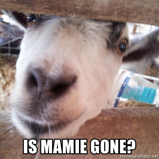 Animals with song quotes - Is Mamie gone?