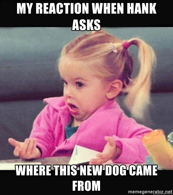 I have no idea little girl  - My reaction when hank asks  Where this new dog came from