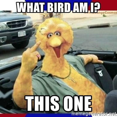 Big Bird Middle Finger - what bird am i? this one