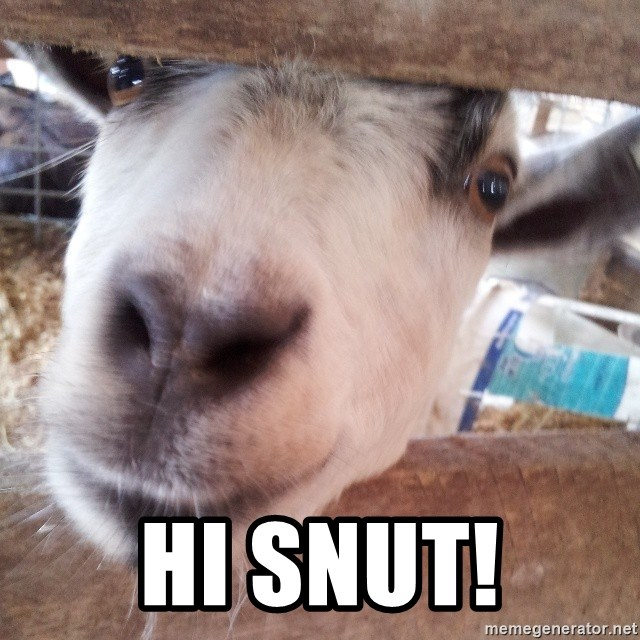 Animals with song quotes - Hi Snut!