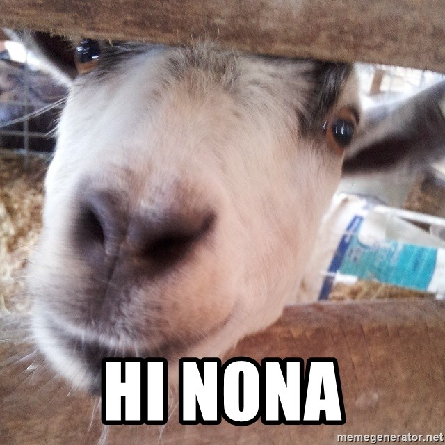 Animals with song quotes - Hi nona
