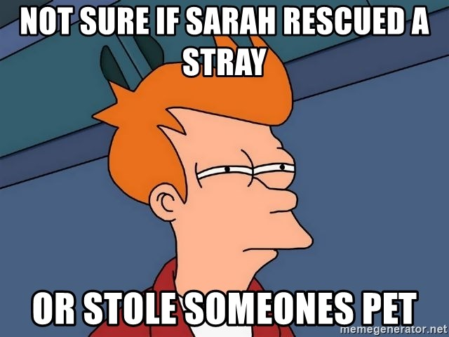 Futurama Fry - not sure if sarah rescued a stray or stole someones pet