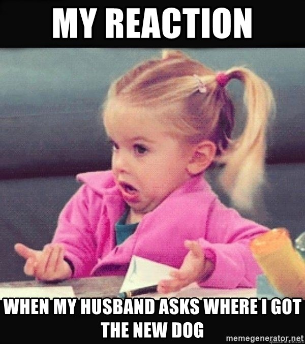 I have no idea little girl  - My reaction  when my husband asks where i got the new dog