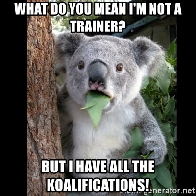 Koala can't believe it - What do you mean I'm not a trainer? But I have all the Koalifications!