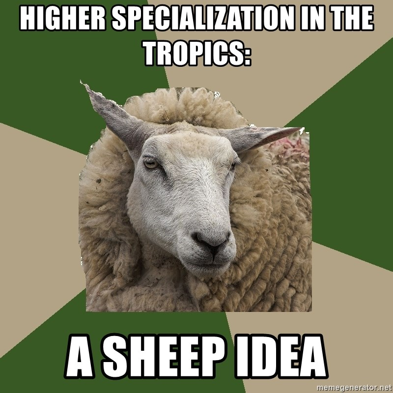 Sociology Student Sheep - higher specialization in the tropics: a sheep idea