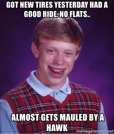 Bad Luck Brian - Got new tires yesterday had a good ride, no flats..  Almost gets mauled by a hawk
