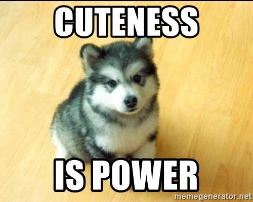 Baby Courage Wolf - cuteness is power