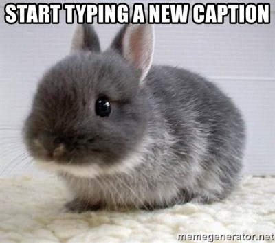 ADHD Bunny - start typing a new caption