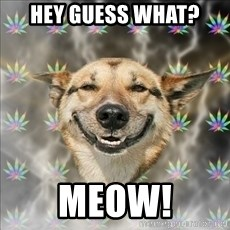 Original Stoner Dog - hey guess what? meow!