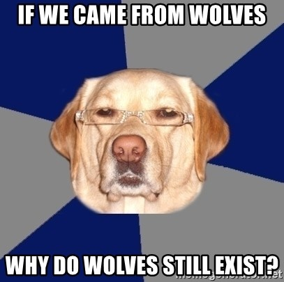 Racist Dog 1 - If we came from wolves why do wolves still exist?