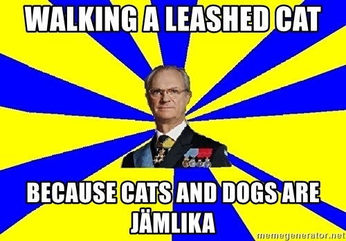 swedishproblems.tumblr.com - Walking a leashed cat because cats and dogs are jämlika