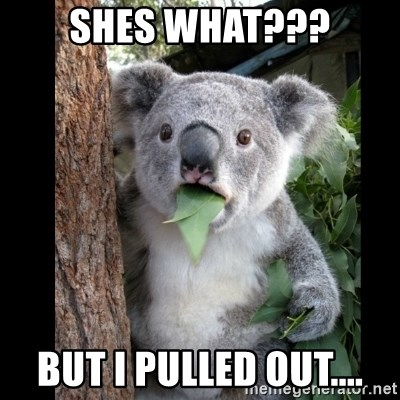 Koala can't believe it - shes what??? but i pulled out....