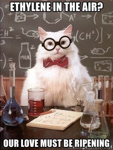 Chemistry Cat - Ethylene in the air? Our love must be ripening
