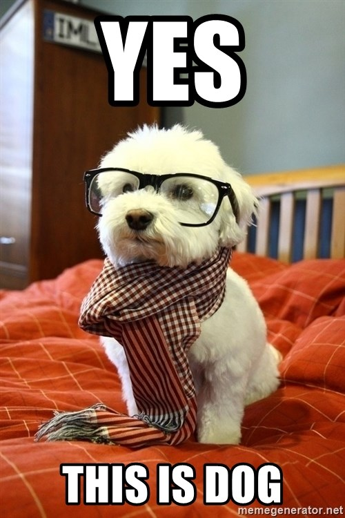 hipster dog - YES THIS IS DOG