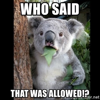 Koala can't believe it - WHO SAID  THAT WAS ALLOWED!?