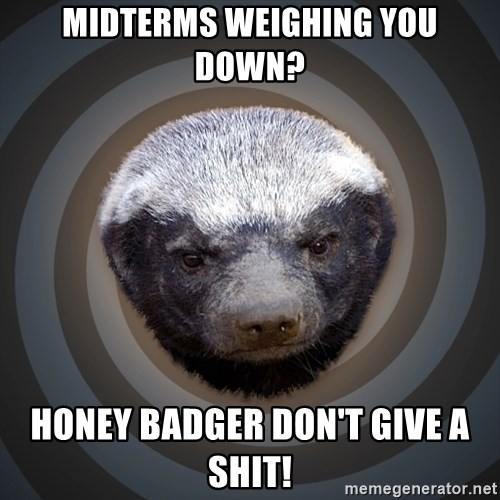 Fearless Honeybadger - midterms weighing you down? honey badger don't give a shit!