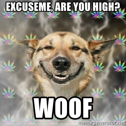 Stoner Dog - excuseme, are you high? woof