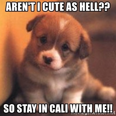 cute puppy - Aren't I cute as hell?? so stay in cali with me!!